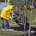 посадка деревьев в Москве