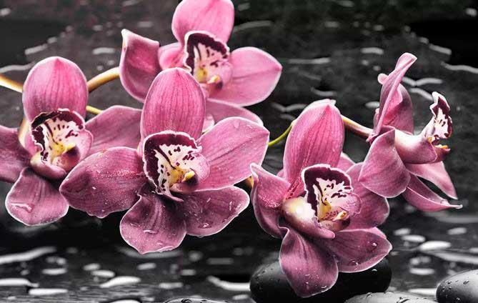 Советы по уходу за орхидеями