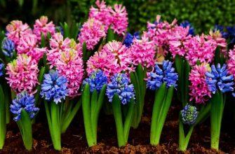 Растение для цветения к нужной дате
