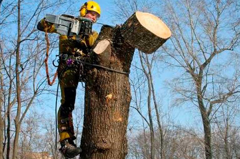 Безопасное удаление аварийных деревьев