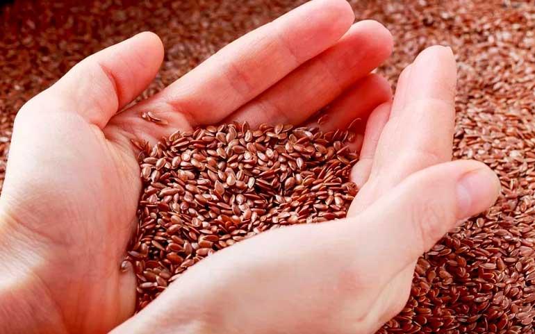 Как и где выбирать хорошие семена