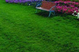 Газонная трава - атрибут прекрасного сада