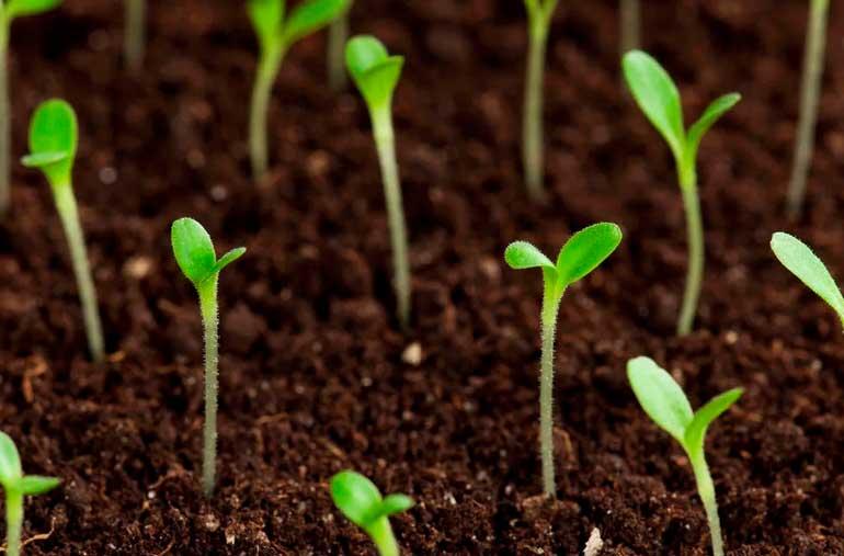 качественные семена цветочных растений